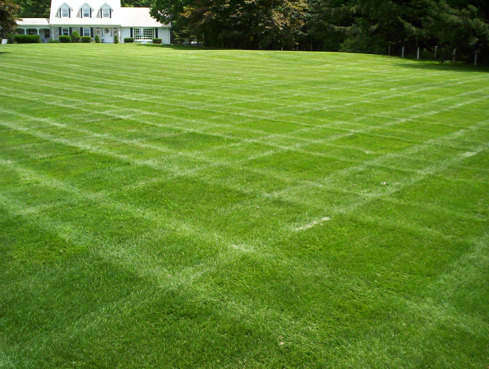 Fertilizing tips grassmaster for Garden lawn maintenance